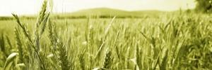 Mutuo Agrario